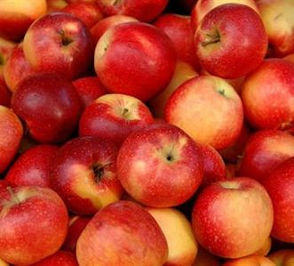 Artisan cider making course